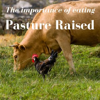 The Importance of eating Pasture Raised Animals