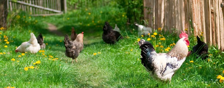 The Importance Of Eating Pasture Raised Animals Sheri Glows
